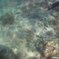Bali - Deel 6 - Gili Trawangan, snorkelen met schildpadden en mooie stranden!